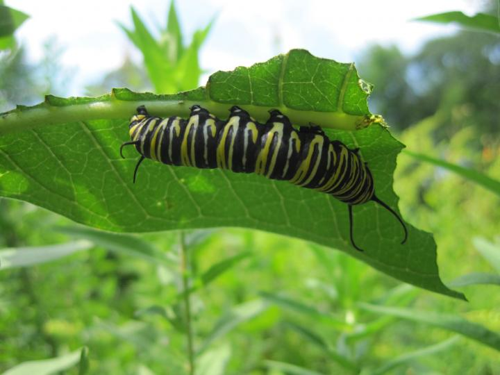 butterflies_and_caterpillars_029_full_width.jpg