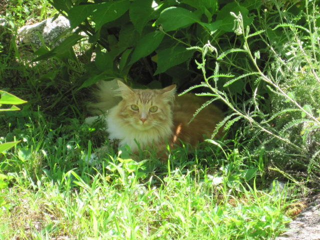 how to keep cats out of the garden. Kitty Boy Floyd, My Furry Friend, In The Garden. How To Keep Cats Out Of Garden L