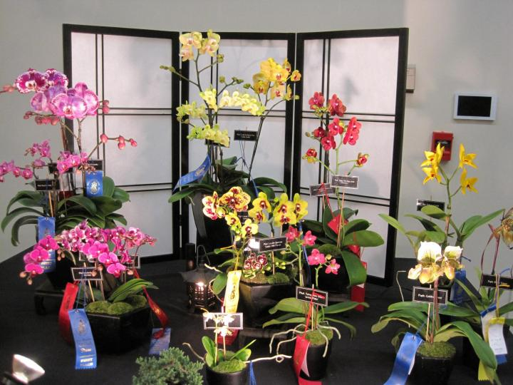 orchid_show_2016_007_full_width.jpg