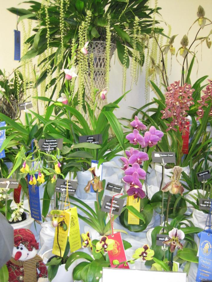 orchid_show_2016_011_full_width.jpg