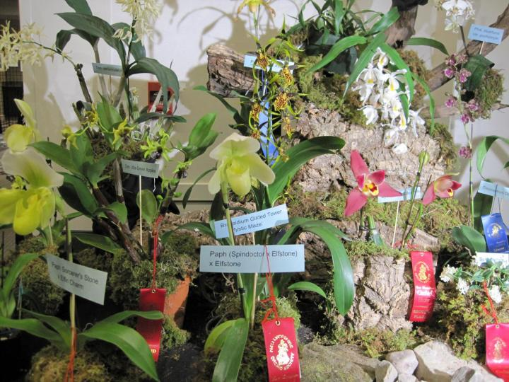 orchid_show_2016_013_full_width.jpg