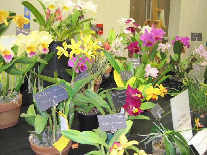 orchid_show_2016_015_full_width.jpg