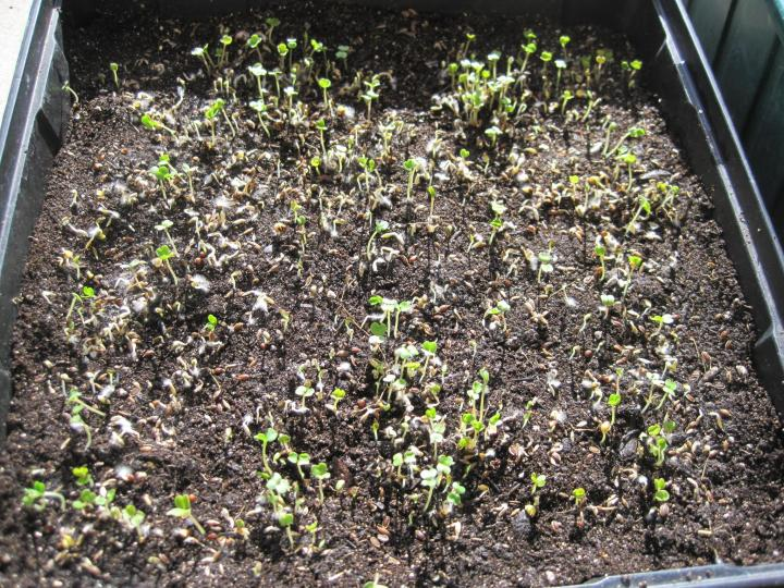 sprouts_010_full_width.jpg