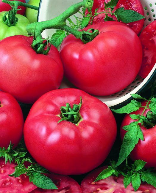 tomato-chefs-choice-red-2-f1-524x650.jpg