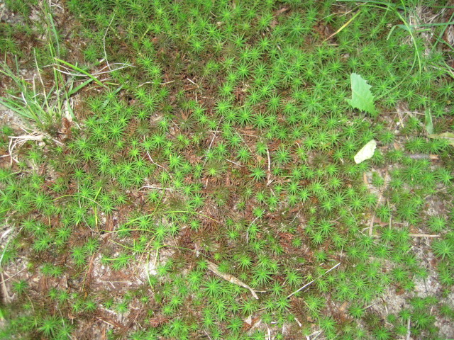 There Are Many Kinds Of Mosses That Thrive In Moist Shady Locations