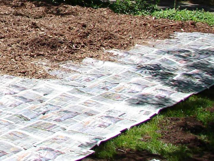 howto start a garden bed from lawn