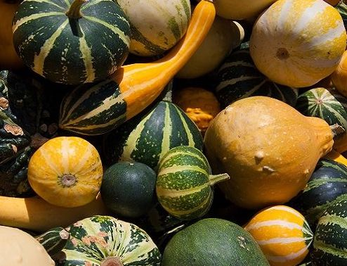 cucurbita-pepo-gourds-small-fruited-mix-45-seeds-7917-p_0.jpg