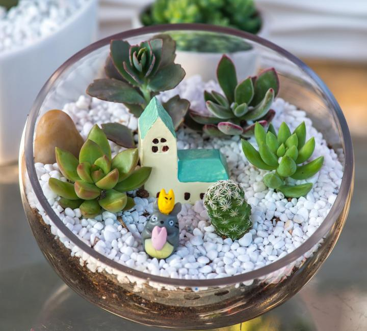 My first attempt at constructing miniature garden was simple.  I used succulents that needed little water or care. Image: asharkyu