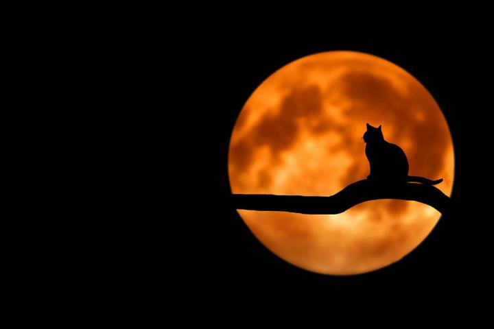 full-moon-and-cat-pxx1000_full_width.jpg