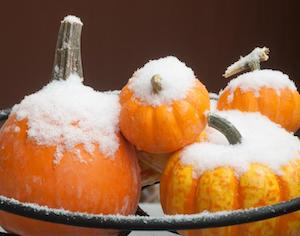 pumpkins with snow