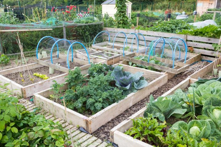 Raised beds. Photo by johnbraid/Shutterstock