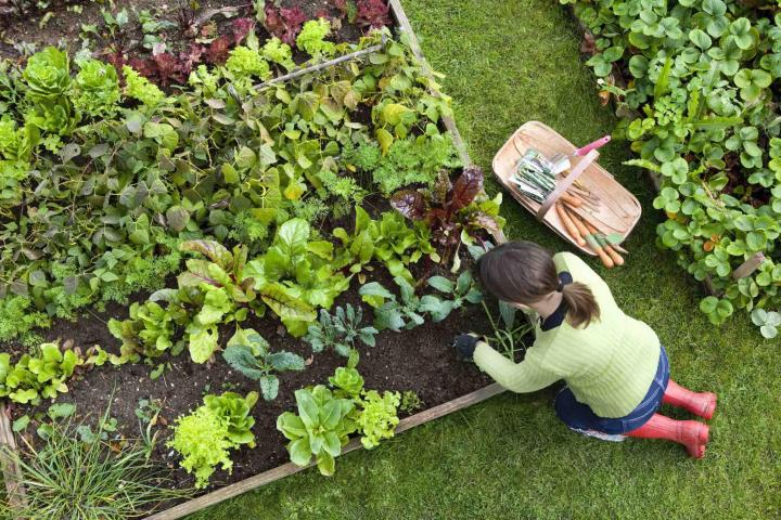 Image: Raised bed gardening. Credit: CJP/Getty Images.