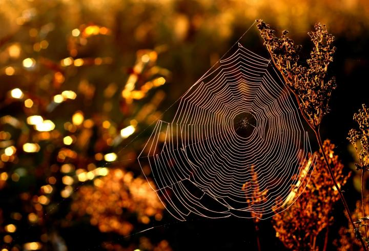 spider-web-gettyimages-610541588_0_full_width.jpg