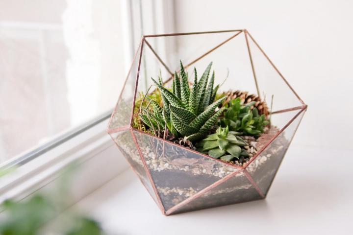 How To Make A Terrarium The Best Plants For Terrariums The Old