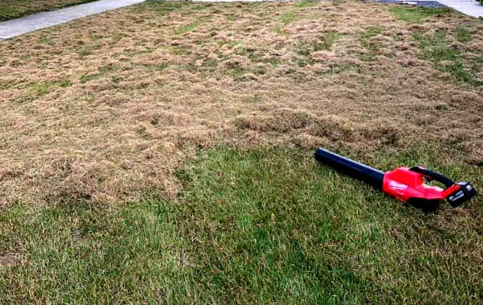 Once you dethatch the lawn with a rake or power dethatcher, rake up the newly exposed thatch.