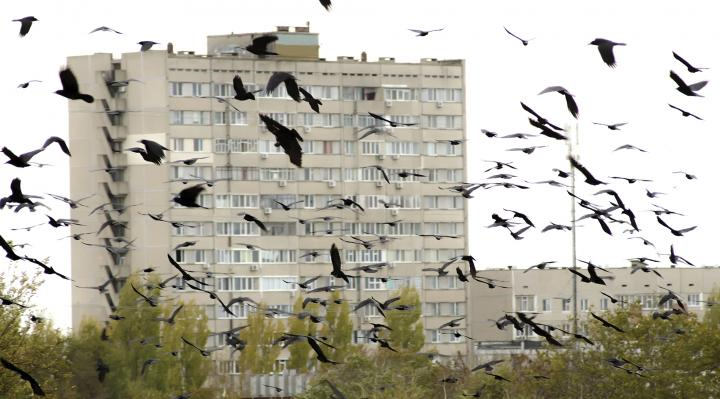 urban-flock-of-crows-preobrajenskiy-ss-_full_width.jpg