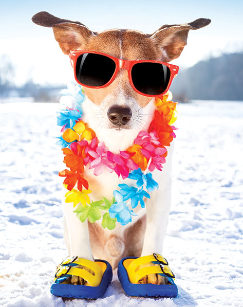 winter-weather-forecast-cool-dog.jpg