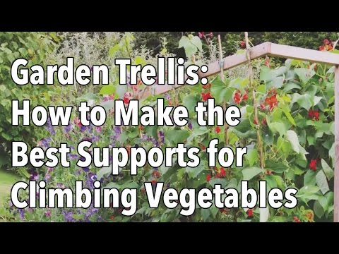 Building A Trellis And Supports For Climbing Vegetables