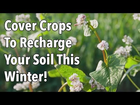 How to Plant Cover Crops to Enrich Soil This Winter (Video) | Old ...