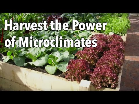 Create a Microclimate Garden to Increase Harvest (Video) | Old Farmer's Almanac
