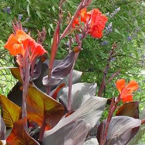 Garden plans foliage layout plant list the old farmer 39 s for Easy to care for outdoor flowering plants