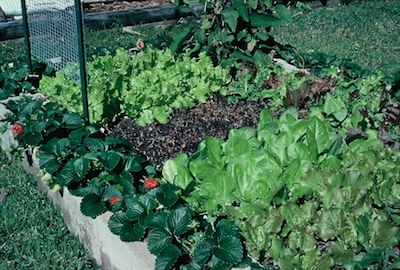 How to Build Cheap and Productive Raised Garden Beds The Old