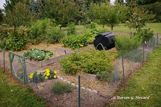Critter Detective: Pests in the Garden | The Old Farmer's ...