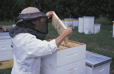 Beekeeping 101: Equipment and Clothing