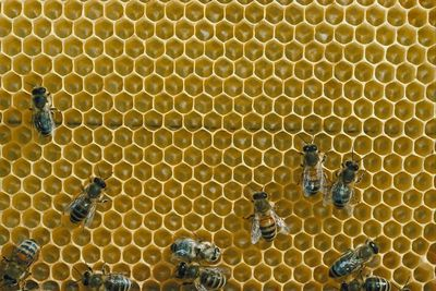 Beekeeping 101: Where to Get Bees
