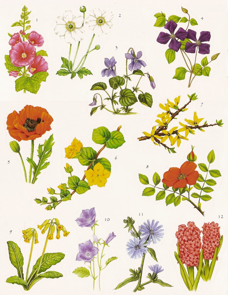 Meaning Of Flowers Symbolic Language Herbs Trees Plants Symbolic Meanings Of Flowers The Old