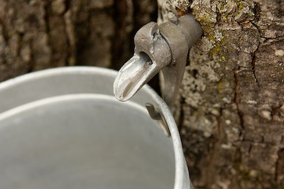 maple syrup sap bucket spigot