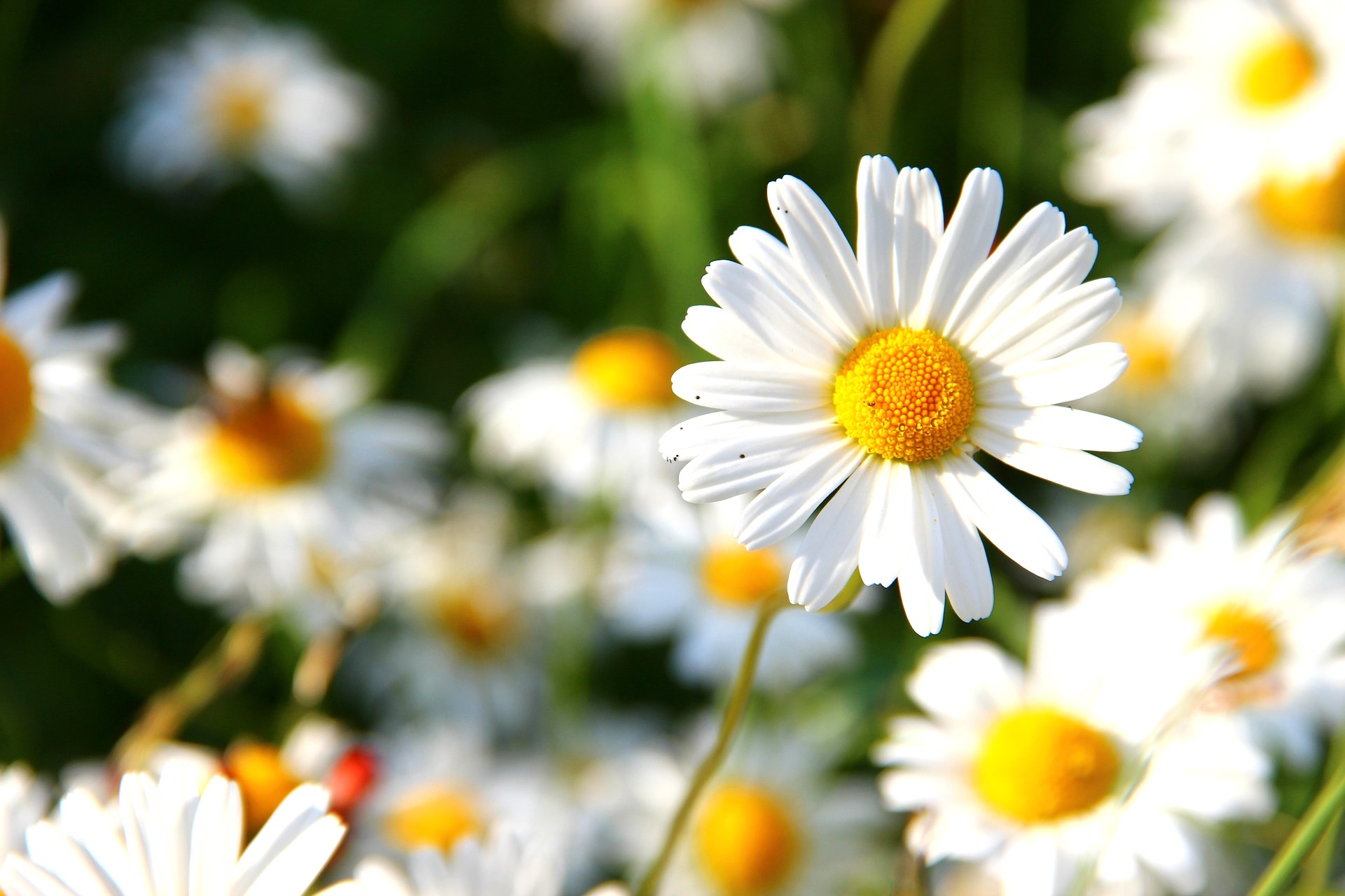 flowers and the reasons why they are offered to gods
