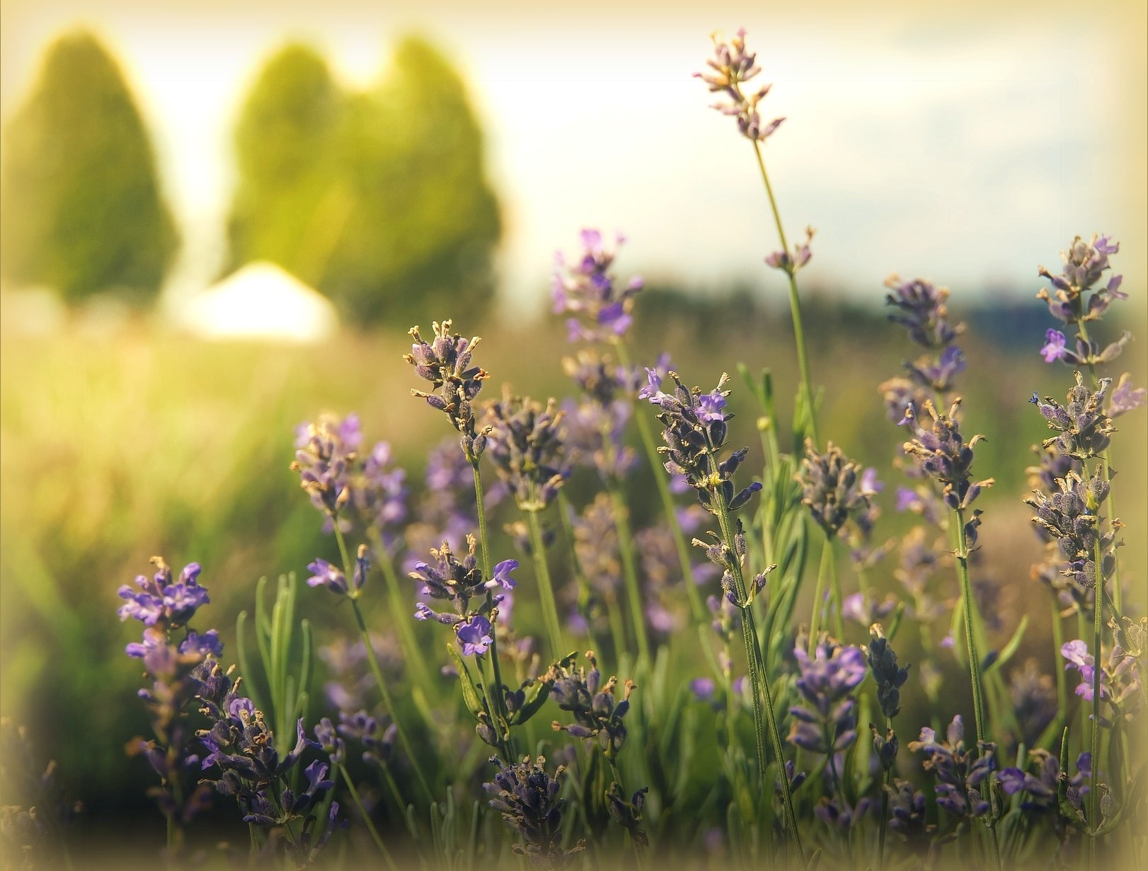 Pest resistant plants more plant advice the old farmer for Outdoor plants and flowers