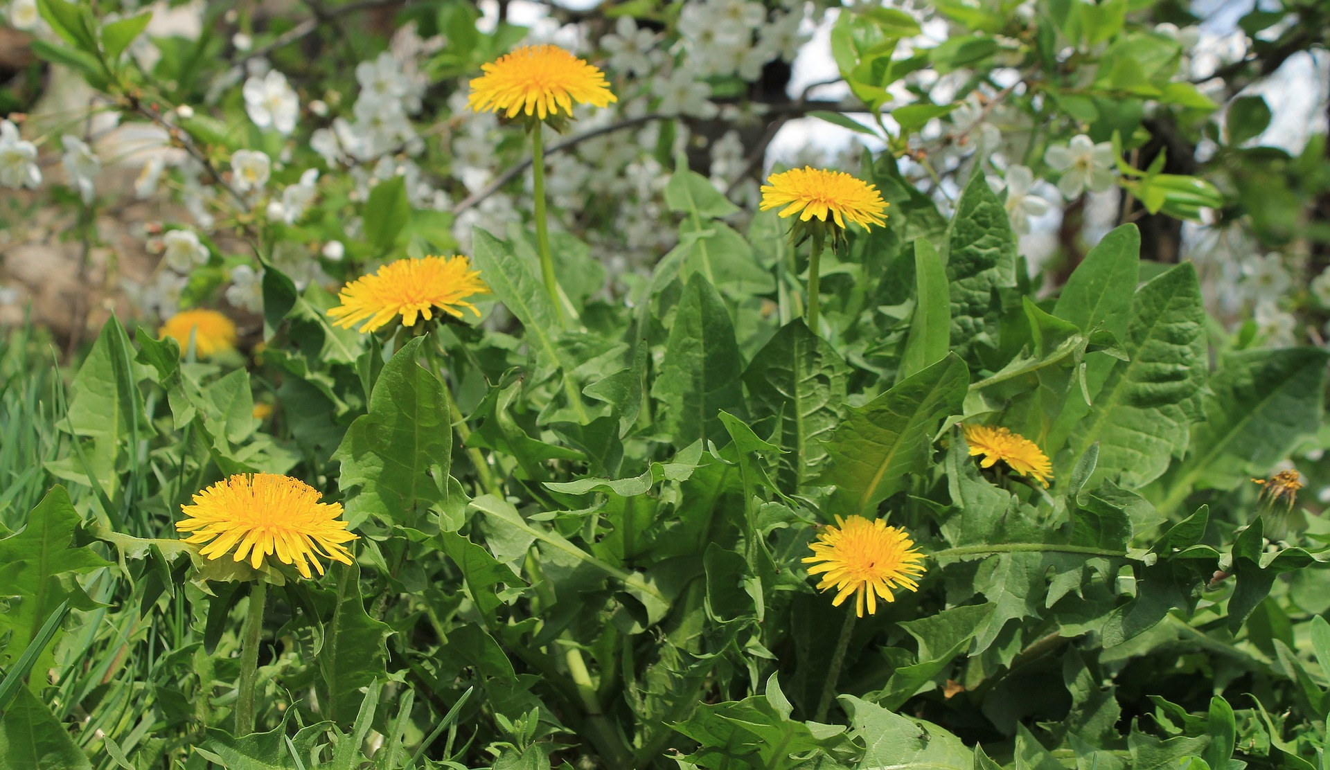 Weeds As Indicator Plants What Can Weeds Tell You About