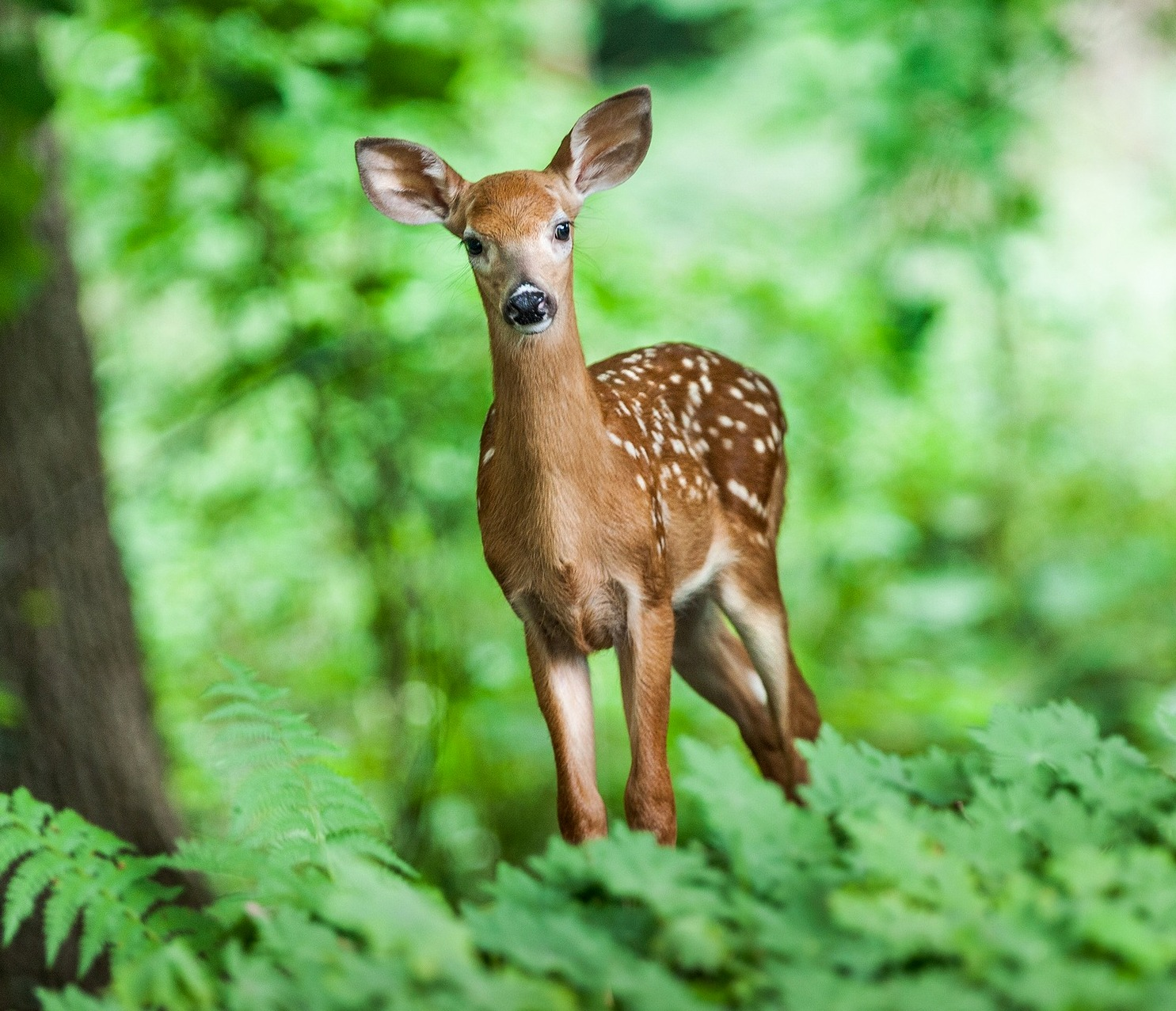 Summer Decor Deer How To Identity And Keep Deer Out Of Your Garden
