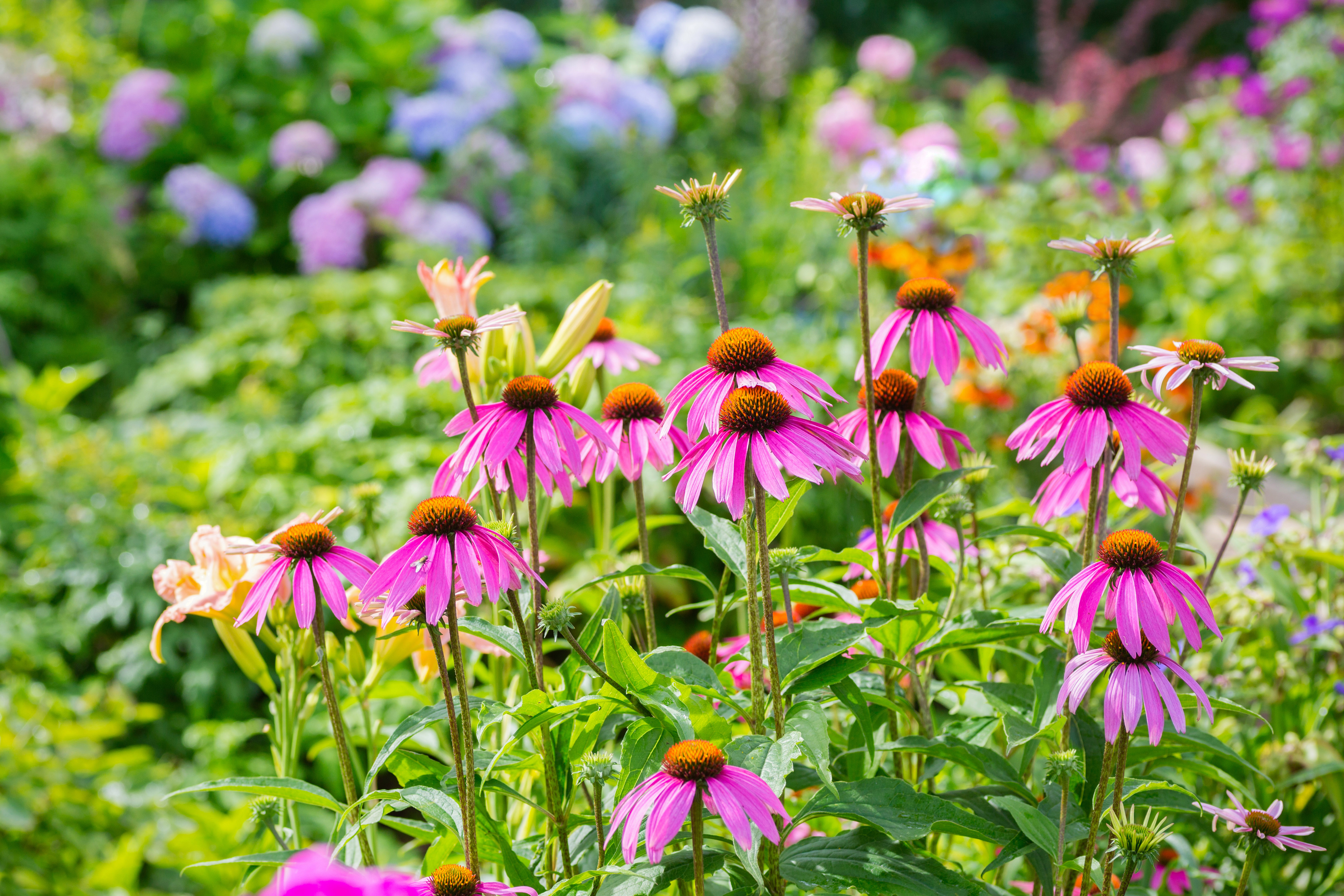 Easiest perennials to grow how to have an easy garden for Easiest outdoor plants