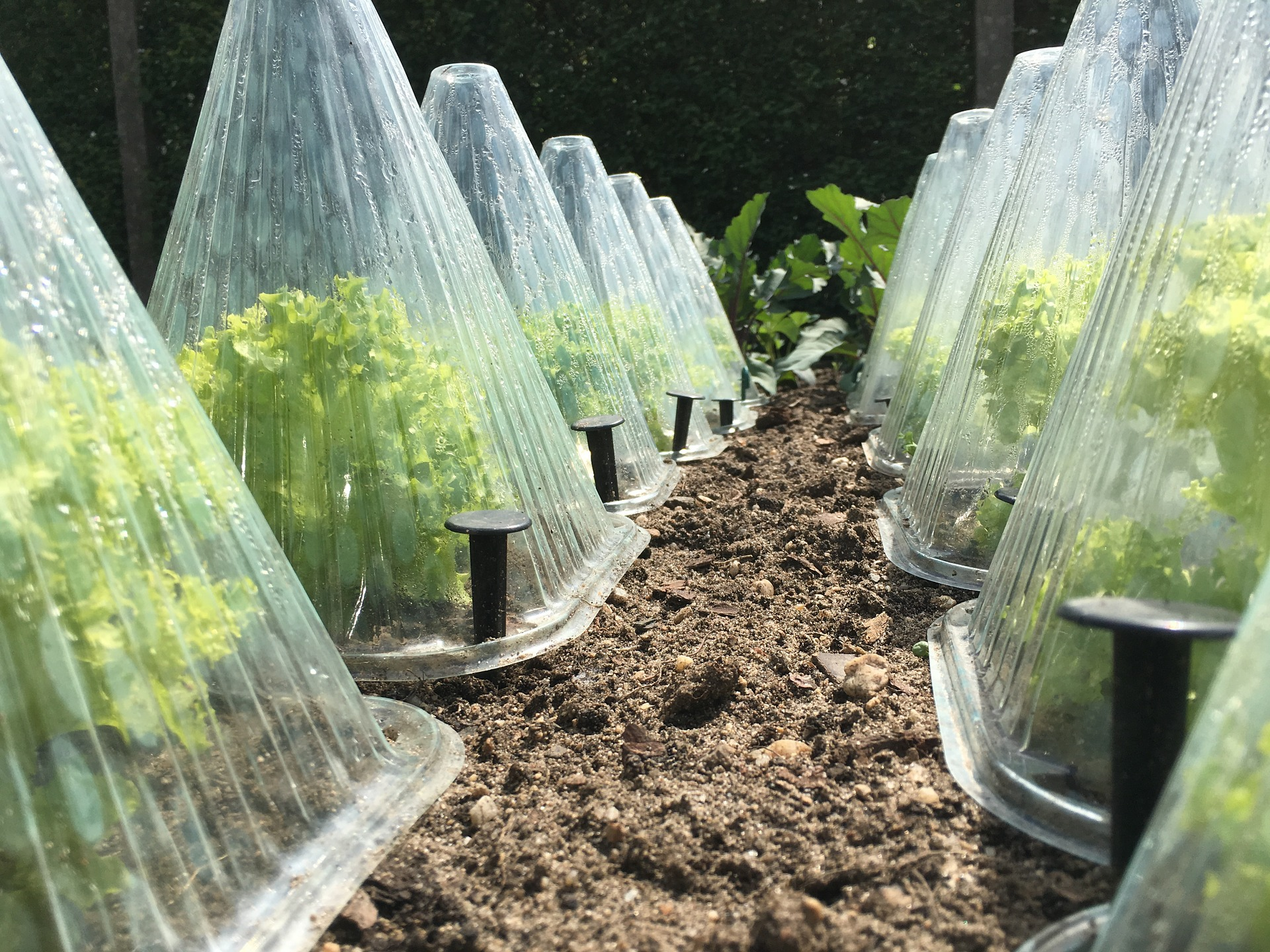 Protecting Your Garden From Frost How To Prevent Frost