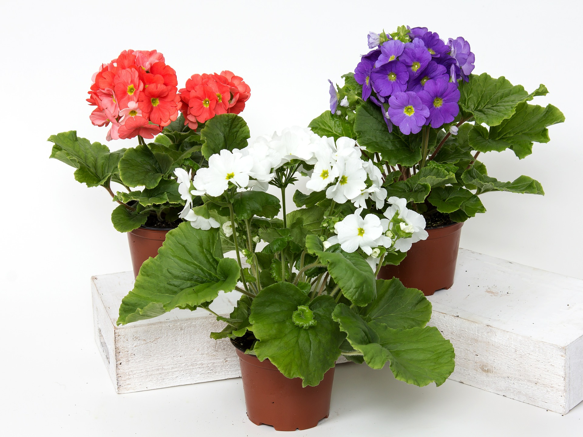 Plants Growing Guide How to Grow Flowers Roses Bulbs Shrubs Perennials ...