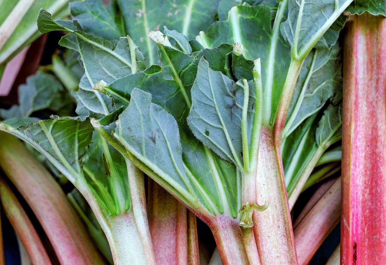 How to plant rhubarb in the fall - Rhubarb Planting Growing And Harvesting Rhubarb Plants The Old Farmer S Almanac