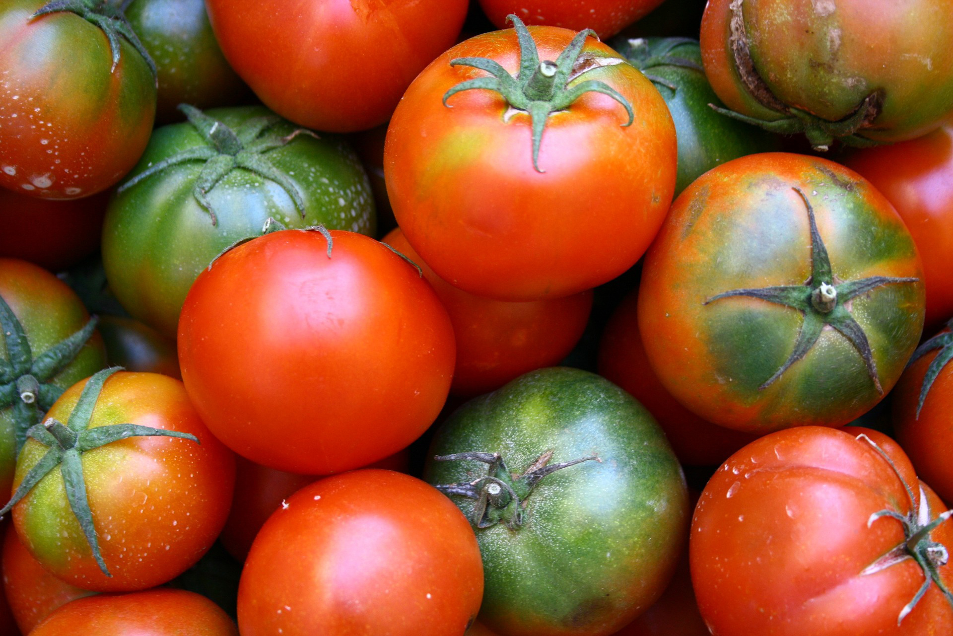 Tomatoes: Planting, Growing and Harvesting Tomato Plants | The Old ...