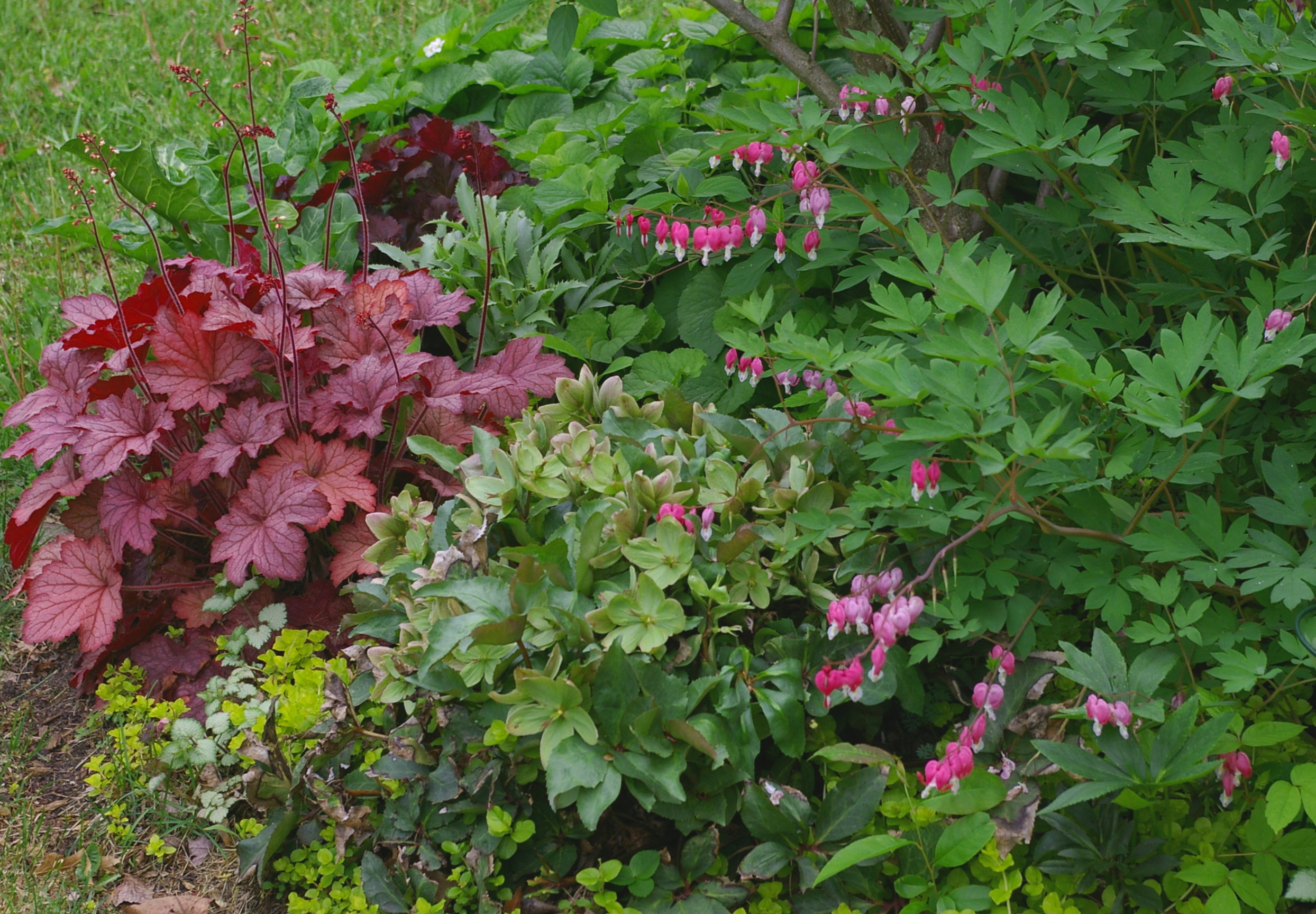 Gardening Plants that grow in shade and shady garden