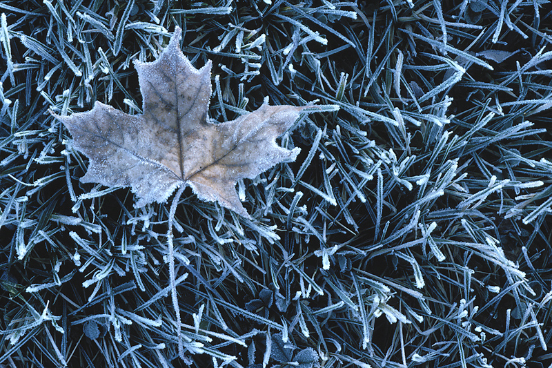 Canada frost freeze freezing dates chart the old farmer for Farmers almanac fishing report