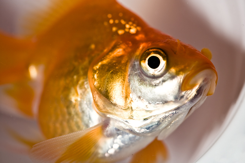 Three ways not to kill your fish the old farmer 39 s almanac for How to clean a fish tank without killing the fish