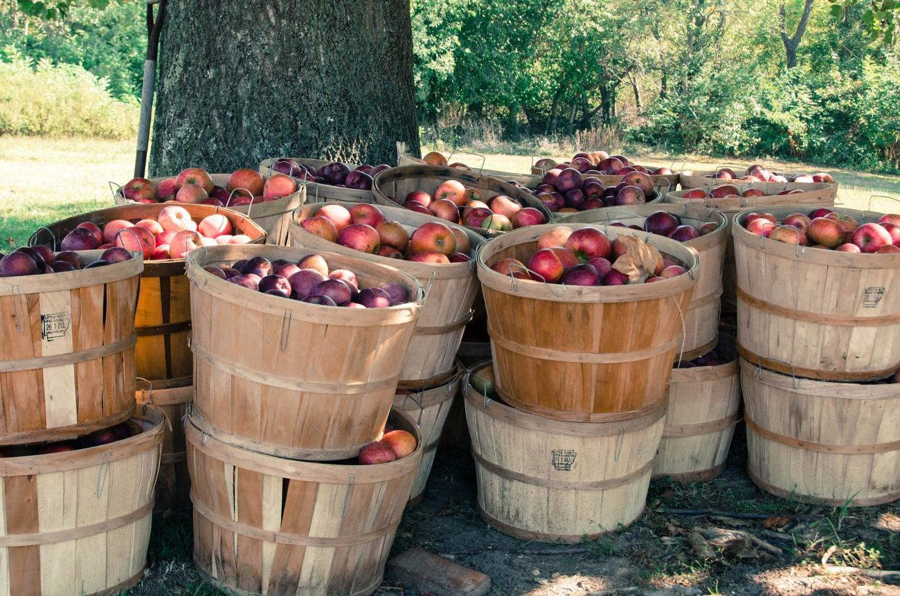 Old-Time Measures Bushel of Apples