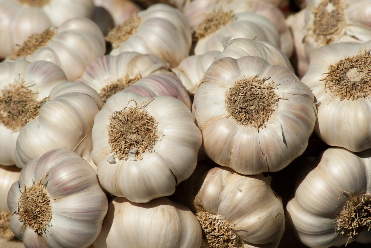 Growing Garlic (U.S.)