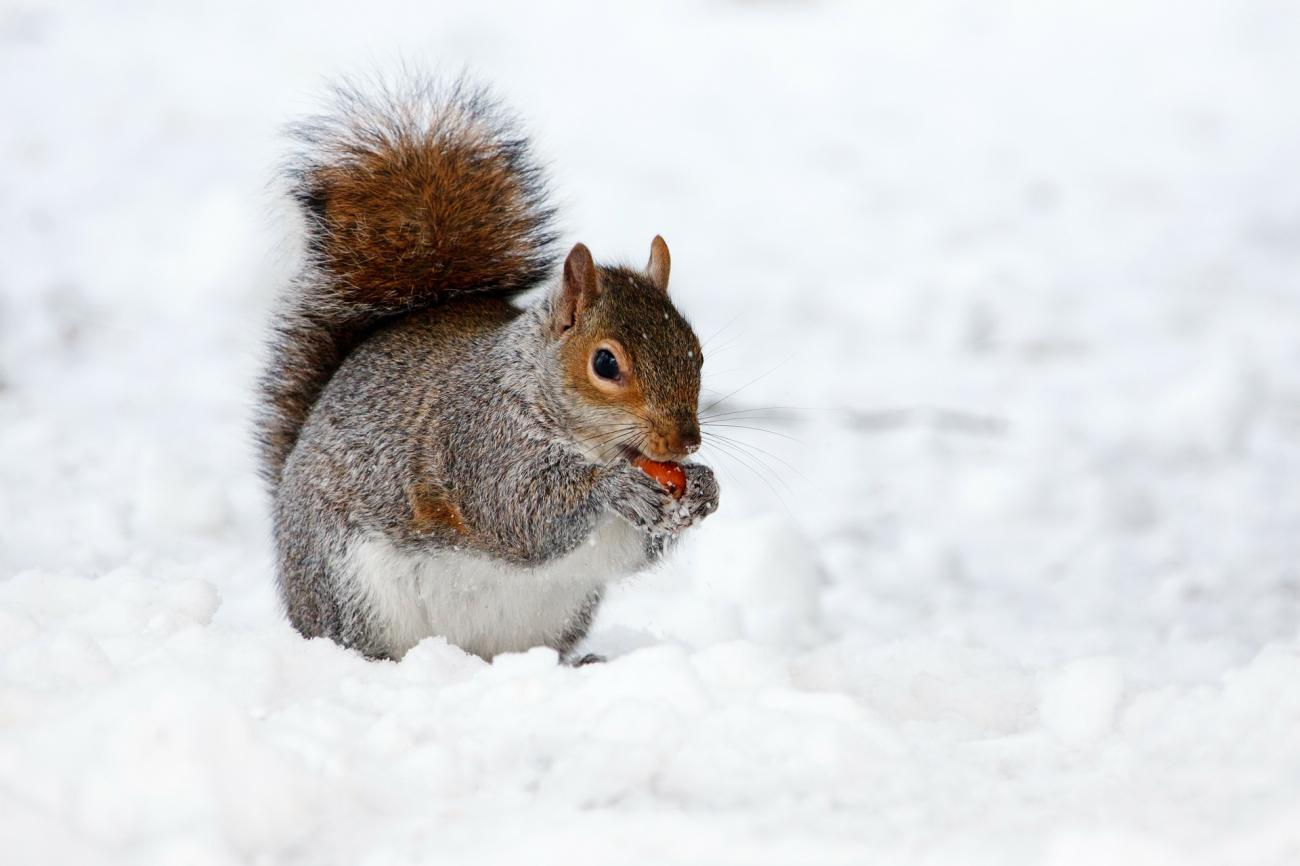 Folklore: Squirrels and Nuts