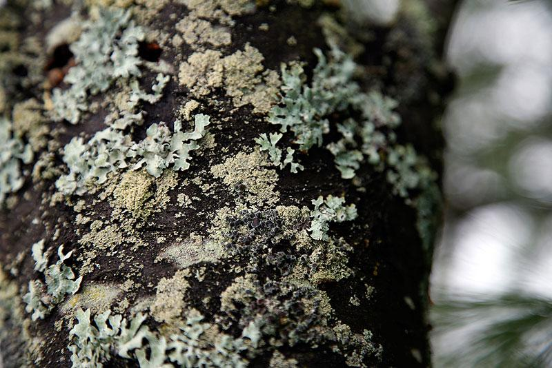 Lichen on a Log
