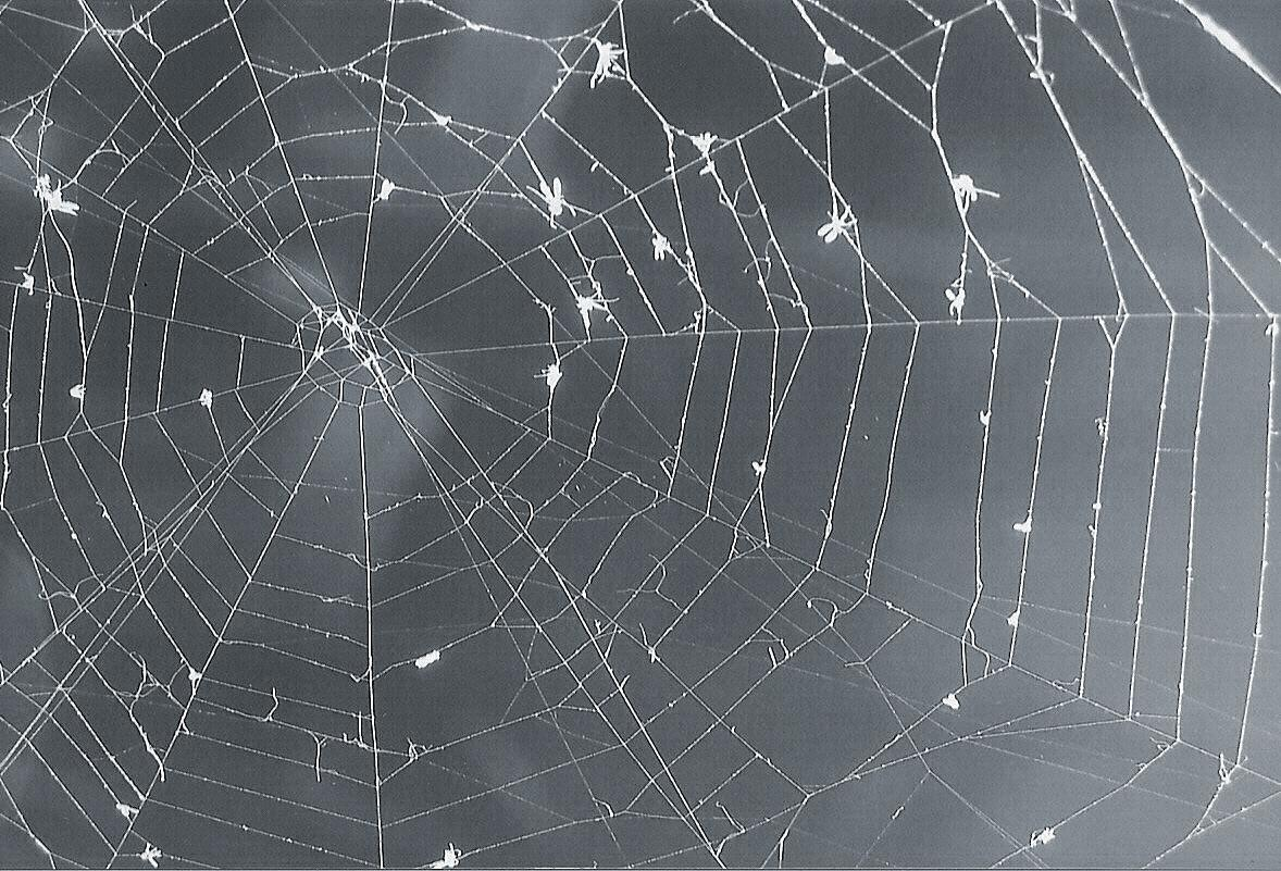 The Real Web