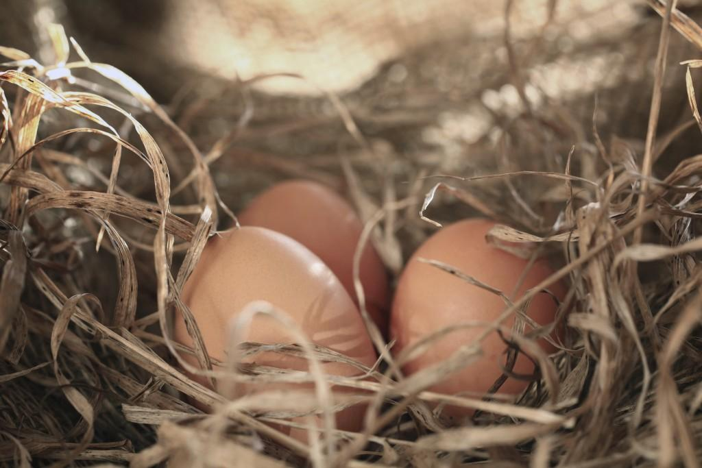 Raising Chickens 101: When Chickens Stop Laying Eggs, How to ...