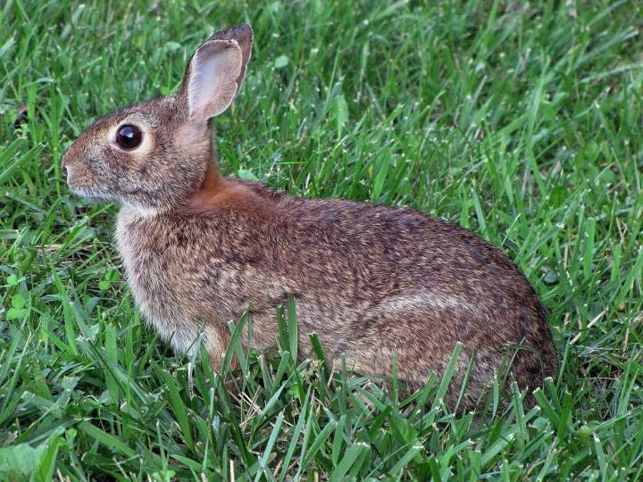keep-rabbits-out-of-garden.jpg